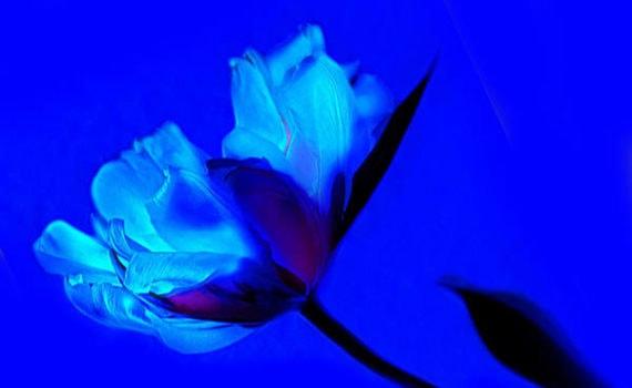 Retouche photo_fleur